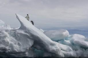 DSC05640 Peninsula Antarctic Sound sea ice Adelies